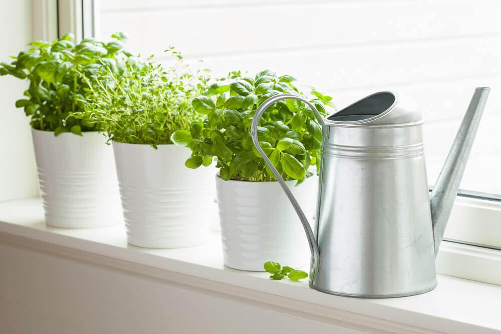 Plantjes in de keuken
